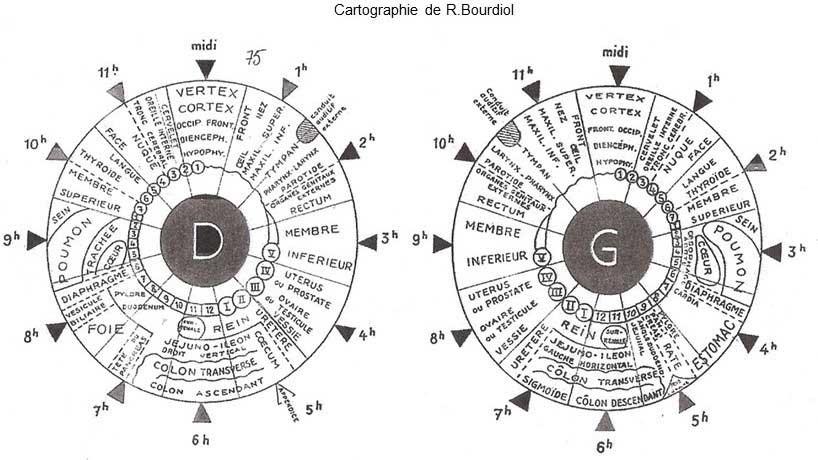 Cartographie Bourdiol iridologie