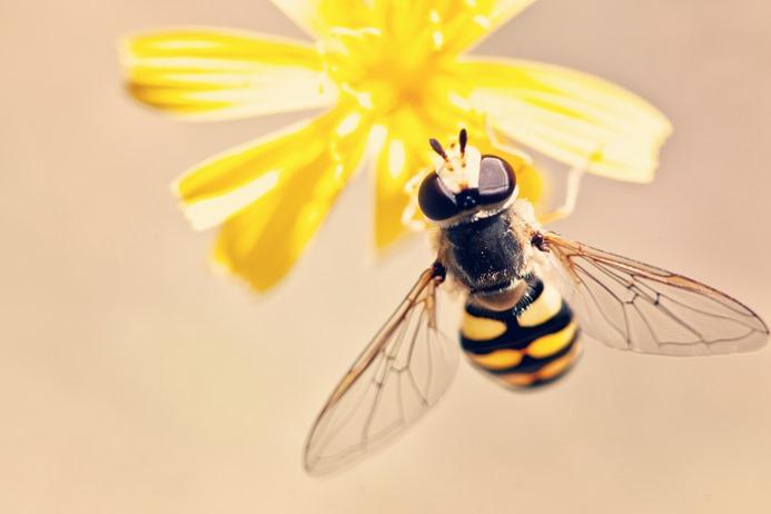Propolis, le trésor des abeille pour une pleine santé. Renforcer vos défense immunitaire avant l'arrivée de l'hiver.