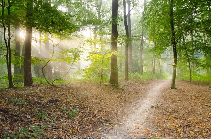 forêt nature balade vivre plus longtemps